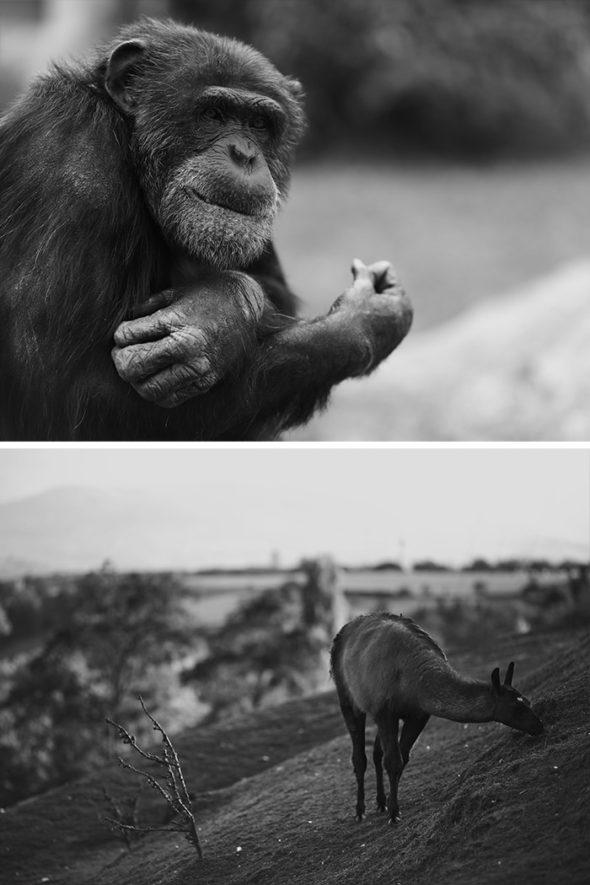 cours photo pratique au zoo de st martin la plaine entre