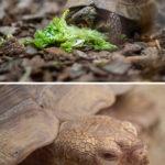 zoo-st-martin-tortue-hd