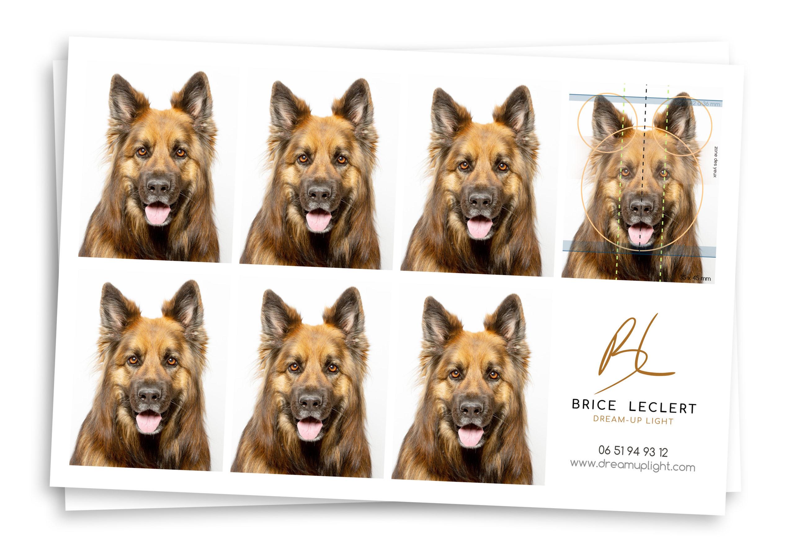 photo identité animaux chien